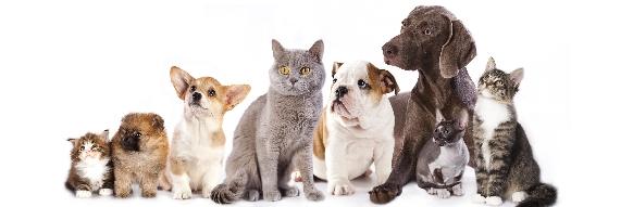 Dog Chat Pet Forums