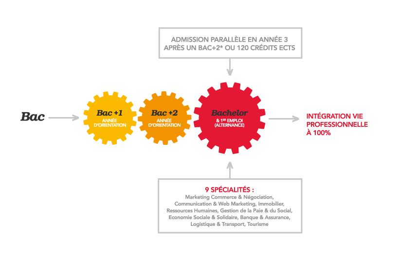 Schéma des études à l'IPAC Bachelor Factory